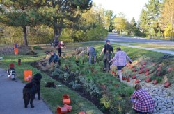 people planting a new rain garden