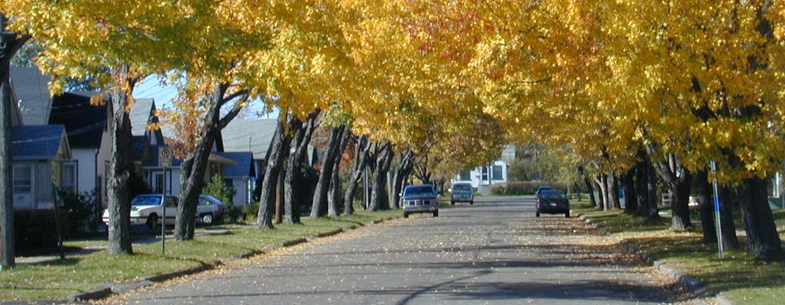 yello leaves on trees lining road