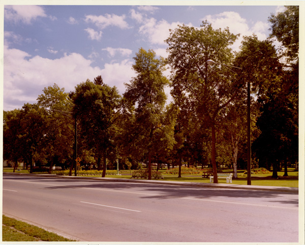 A coloured photograph of a paved pathway and trees