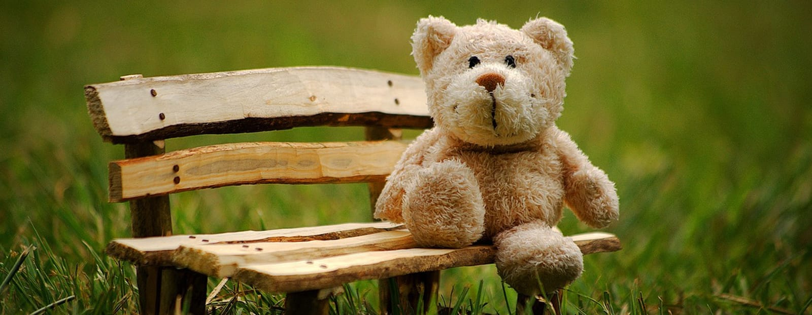 teddy bear on park bench